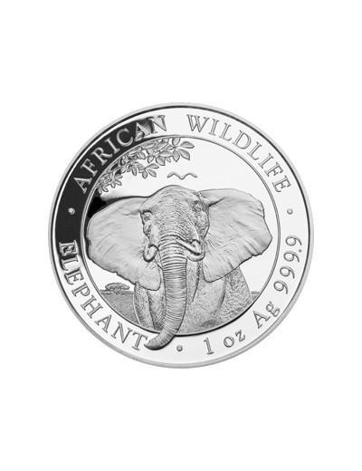 Słoń Somalijski 2021 1...