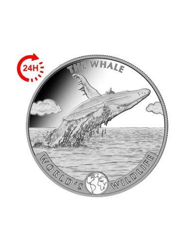 Wieloryb - Kongo 2020 1...